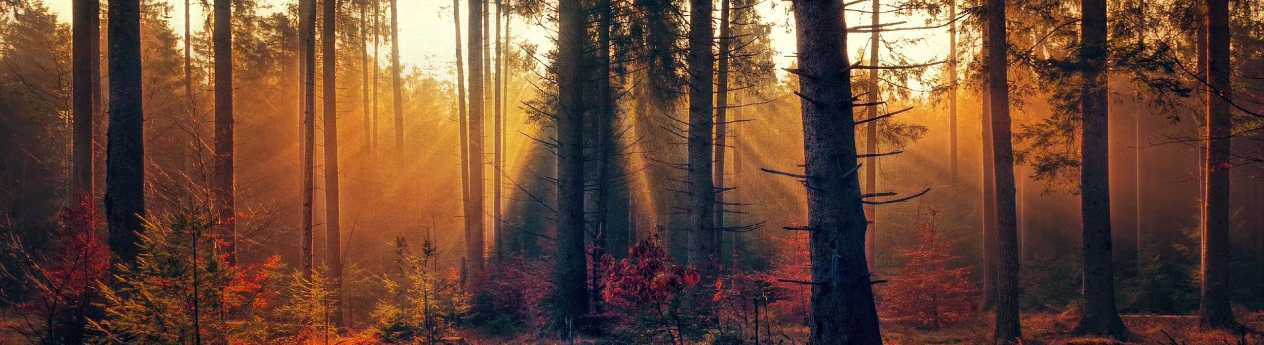 forest-3392077_1920_slider_02
