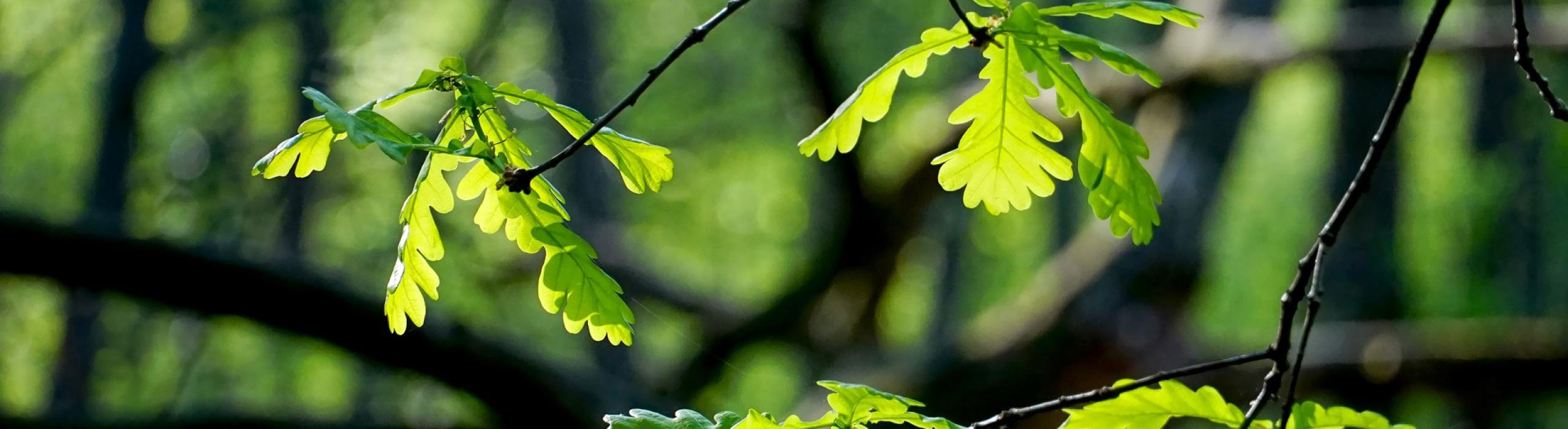 leaf-3335211_1920_slider_01